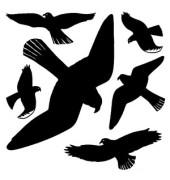 5999 Warnvögel Etiketten schwarz 30 x 30 cm