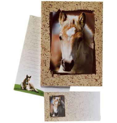 180344 Fohlen liniert Briefpapier Kinder 10/10 braun