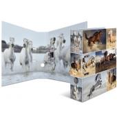 7164 Motivordner Tiere A4 Pferde