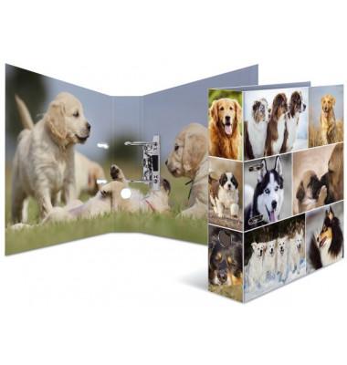 7165 Ordner Tiere A4 Hunde