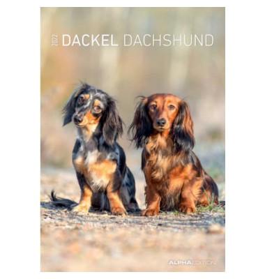 Bildkalender Hunde 1Monat/1Seite 24x34 cm 2021