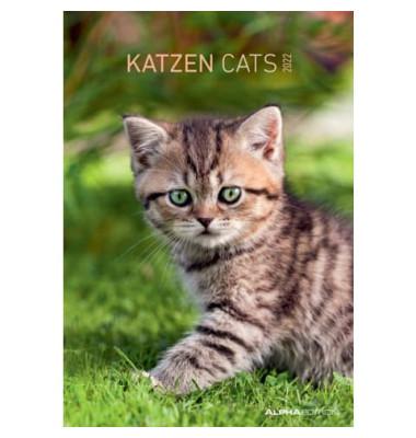 Bildkalender Katzen 1Monat/1Seite 24x34 cm 2021