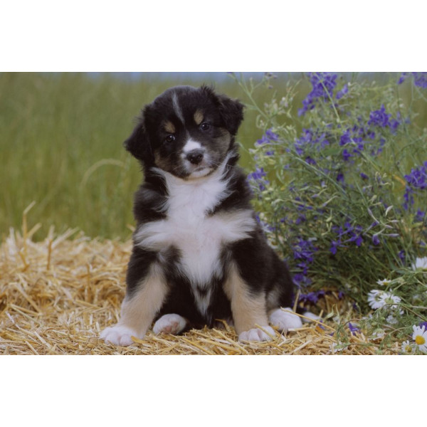 LÄUFER Schreibunterlage 40x53cm Schreibunterlage Motiv Hund