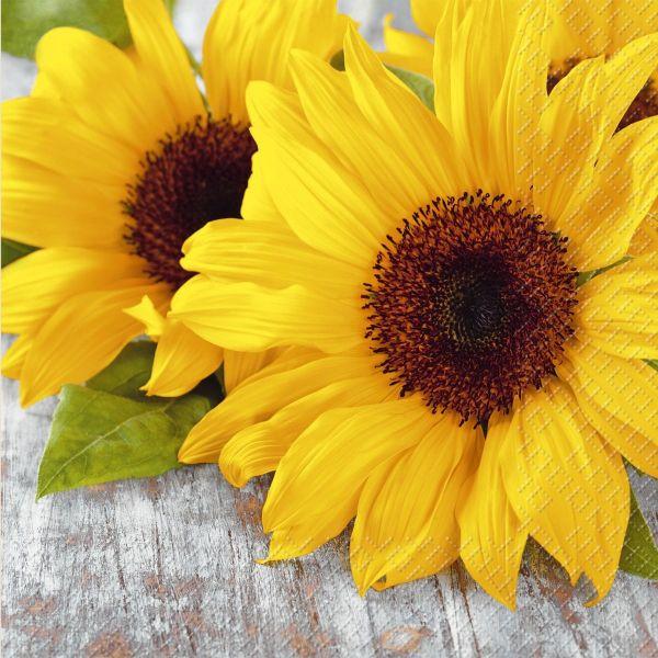 2572 6811 10 33cm 3lag Motivserviette Herbst Sonnenblumen